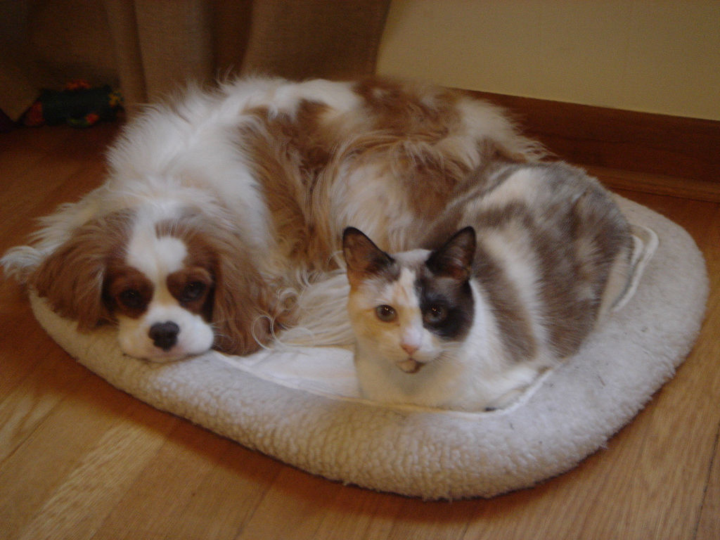 cat and dog This is mimi, the first cat to give birth to puppies, her owner claims brazilian cassia aparecida de souza, 18, says three of the cat s six offspring, which were.