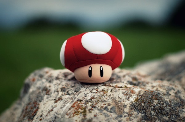 lonely_toad
