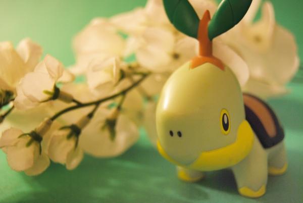 pokemon_turtwig